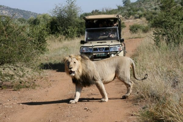 sun city resort game drive